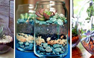 Как красиво посадить суккуленты дома