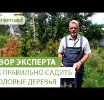 Как вырастить дерево сад