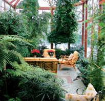 Зимний сад фото