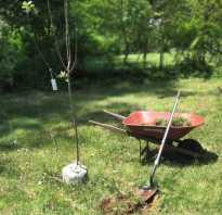 Как высаживать деревья в саду