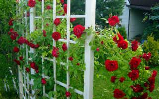 Как отделить огород от сада